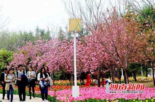 """郑州绿博园""""樱花季""""到来 赏樱游人络绎不绝"""