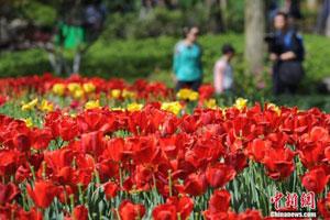 杭州景区鲜花即将凋谢 游客赴春季最后的花期