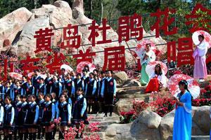 青岛大珠山杜鹃花盛放 将演万人同唱映山红