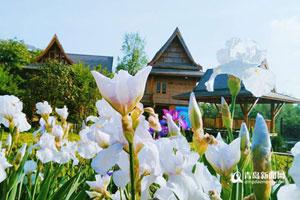 青岛世博园被鲜花占领 万株百合齐放香满园