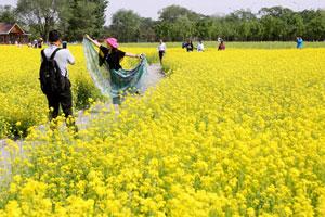 北京:紫谷伊甸园鲜花绽放引游人观赏