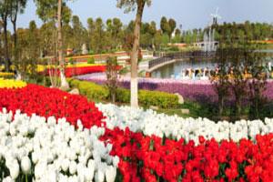 上海光明集团鲜花港 第13届郁金香花展举行