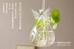 水培花卉15天换一次水