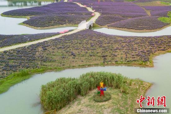 航拍南京河岸花海薰衣草 紫色海洋令人流连忘返
