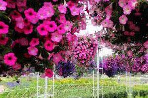 绿满商都花绘郑州 120种花免费欣赏