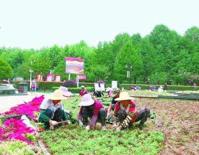 武汉首义广场十八星旗花坛换新装 5万盆太阳花和孔雀草将绽放