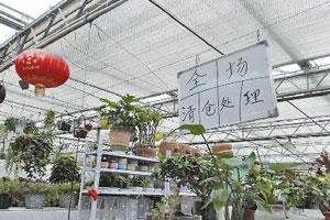 济南中心城区部分花市被拆 市民想买花可以去这儿