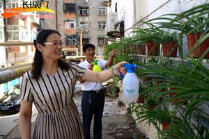 """邯郸城东街社区:墙壁上冒出""""一片绿"""""""