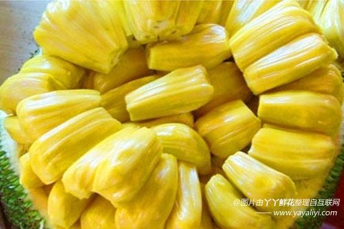 菠萝蜜的分布区域