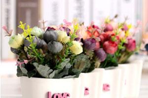 西安:绿植小盆栽销量良好 观花产品销量下滑明显