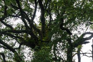 樟树的繁殖方法