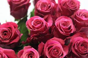 高端鲜花厄瓜多尔玫瑰屡登质检黑榜