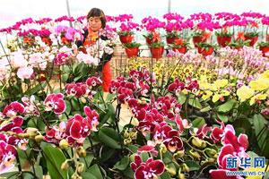 山东青州:鲜花展销迎新年