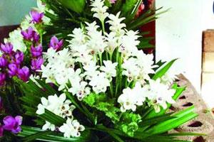 春节临近花卉市场热闹 泰式小清新花卉成新宠