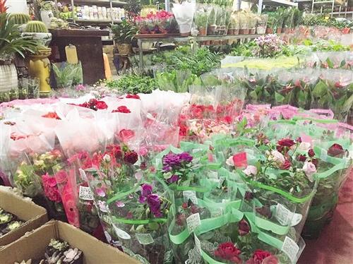 迎春花市热闹开市 上千种鲜花可供你选择