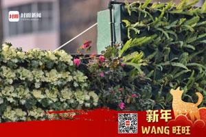 鲜花造型墙矗立成都街头 引市民围观拍照