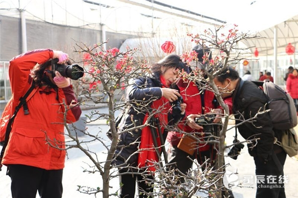 2018长沙(莲花)新春花市启动 近1000种鲜花等你来看