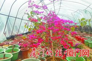 厦门花卉种植户用温室大棚应对天寒