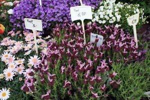 南昌:鲜花价格小幅上涨