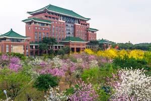 羊城入春,华农校园鲜花绽放绚丽多彩