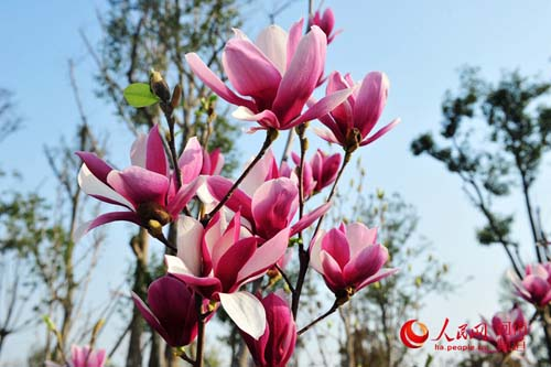 郑州:花开春意浓(组图)