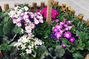 小寨街区 鲜花盛开花香扑鼻
