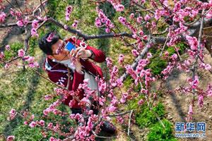 北京明城墙遗址公园鲜花盛开引游人